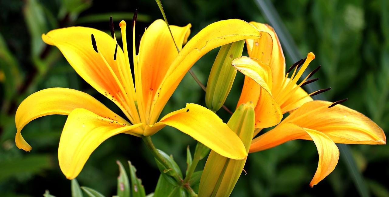 flores de color amarillo